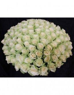 Bouquet of 101 white holland roses | Roses to mother expensive flowers